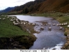 pastoralisme_brebis_08